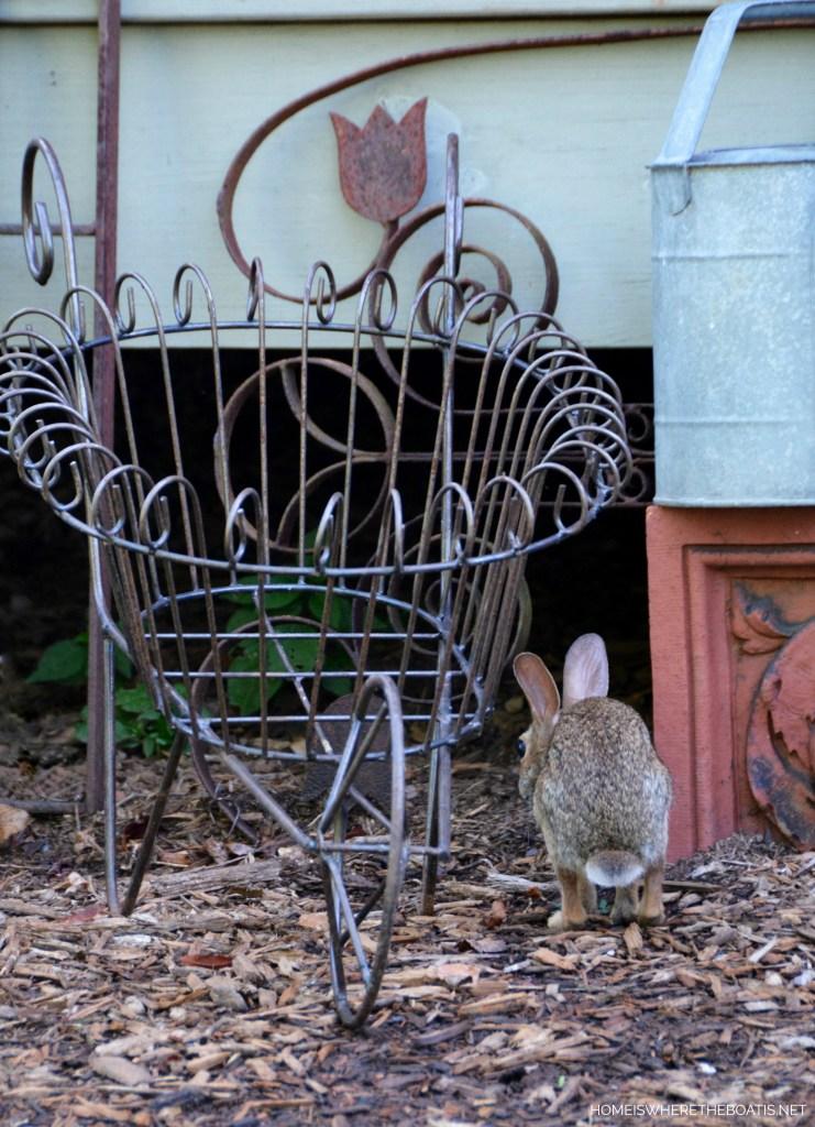 Bunny | ©homeiswheretheboatis.net #garden