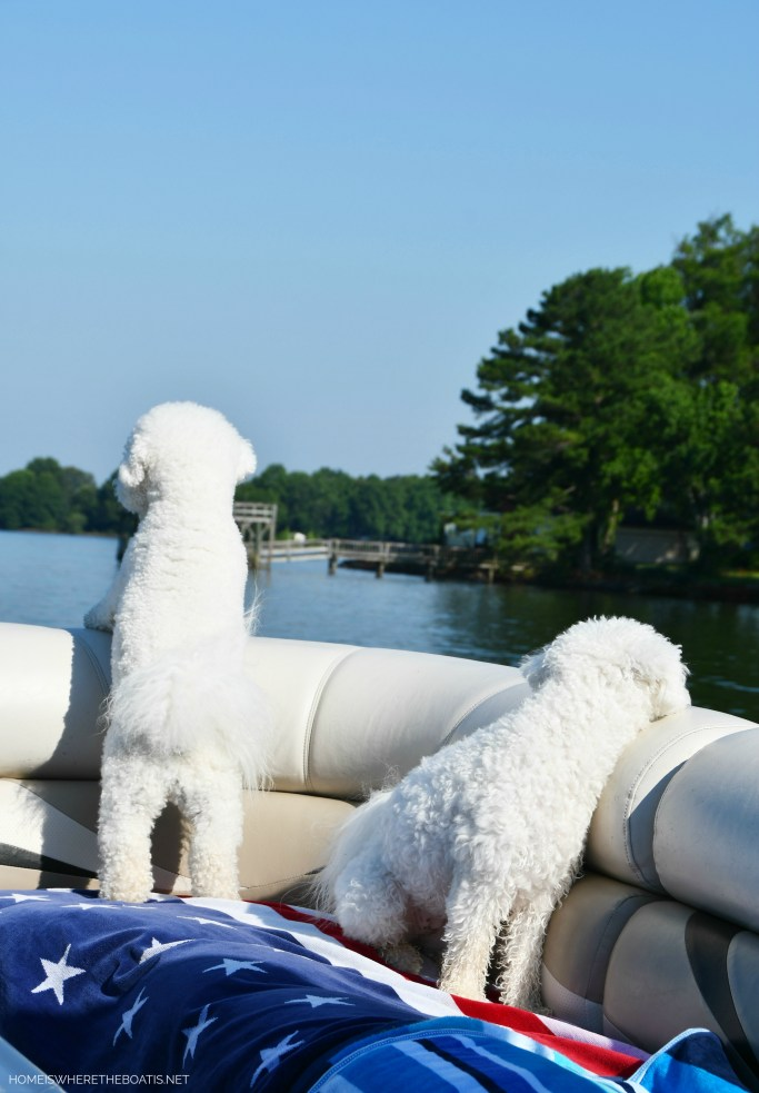 Weekend Waterview boating with dogs | ©homeiswheretheboatis.net #dogs #pontoon #BichonFrise #lake