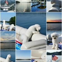 Weekend Waterview: Boating with Dogs