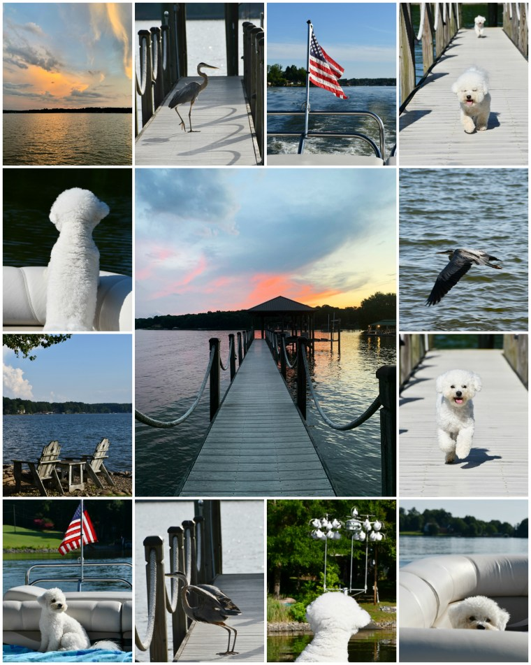 Weekend Waterview Lake Norman | ©homeiswheretheboatis.net #LKN #dogs #sunset #flag #heron #boatingwithdogs