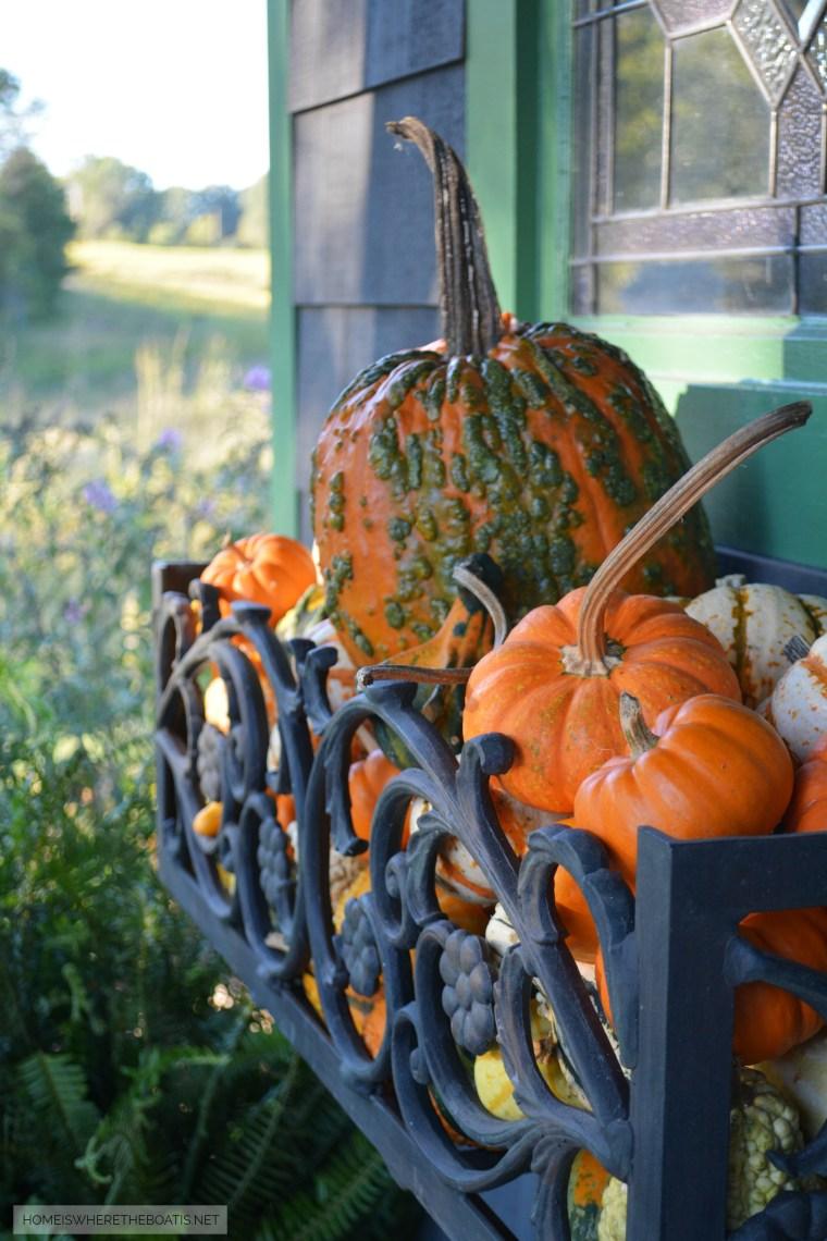 Window box of Potting Shed filled with pumpkins | ©homeiswheretheboatis.net #pumpkins #fall #pottingshed