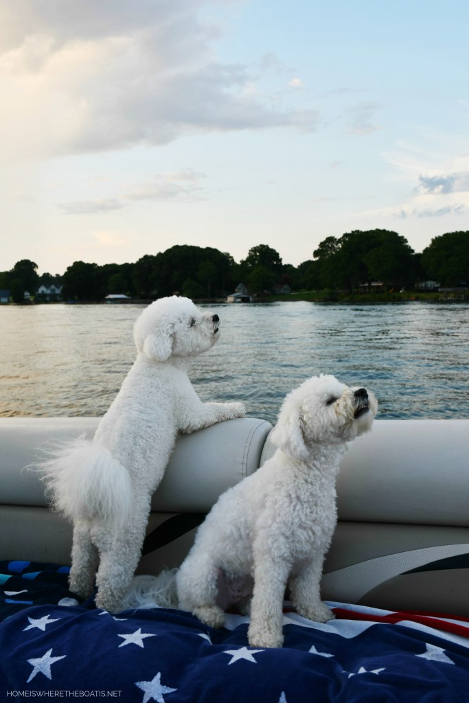 Weekend Waterview Dog Days of Summer | ©homeiswheretheboatis.net #lake #dogs #boat