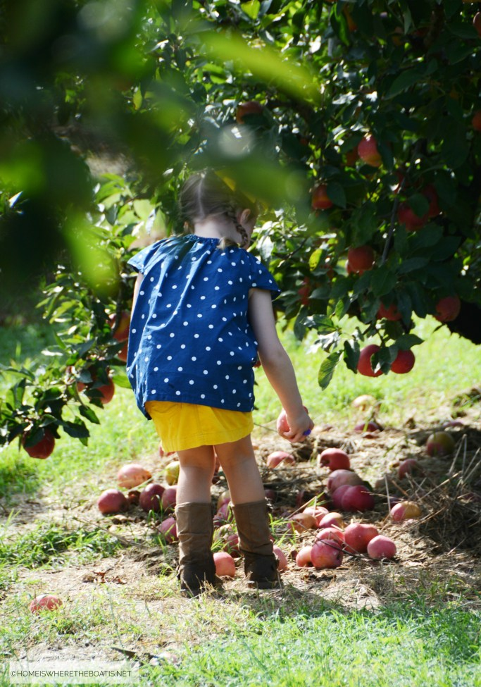 Apple Picking NC | ©homeiswheretheboatis.net #apple #recipes