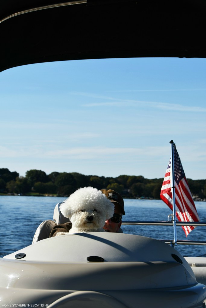 Lola in Captain's chair | ©homeiswheretheboatis.net #LKN #lake #boatingwithdogs #bichofrise