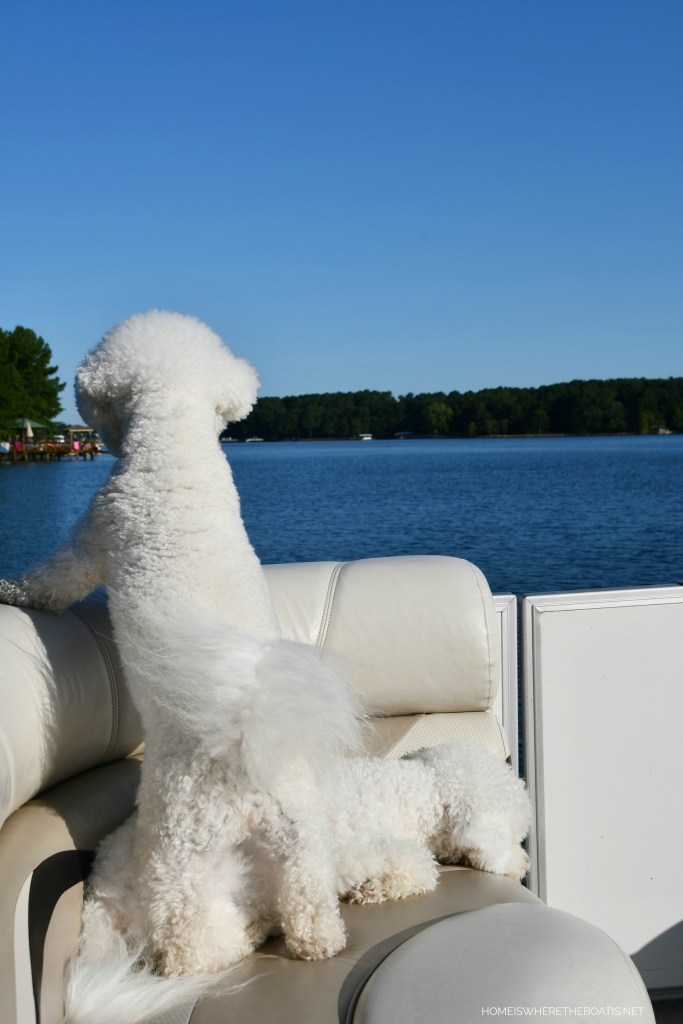 Boating with dogs | ©homeiswheretheboatis.net #lake #boating #dogs #bichonfrise #LKN