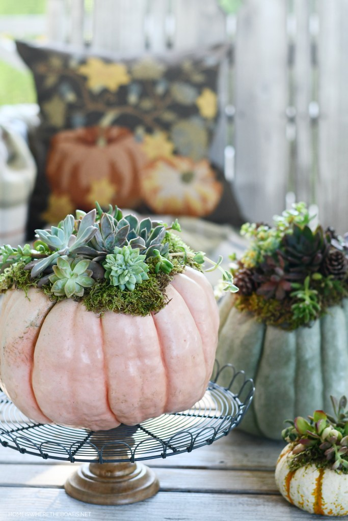 DIY Succulent pumpkins | ©homeiswheretheboatis.net #pumpkins #succulents #DIY