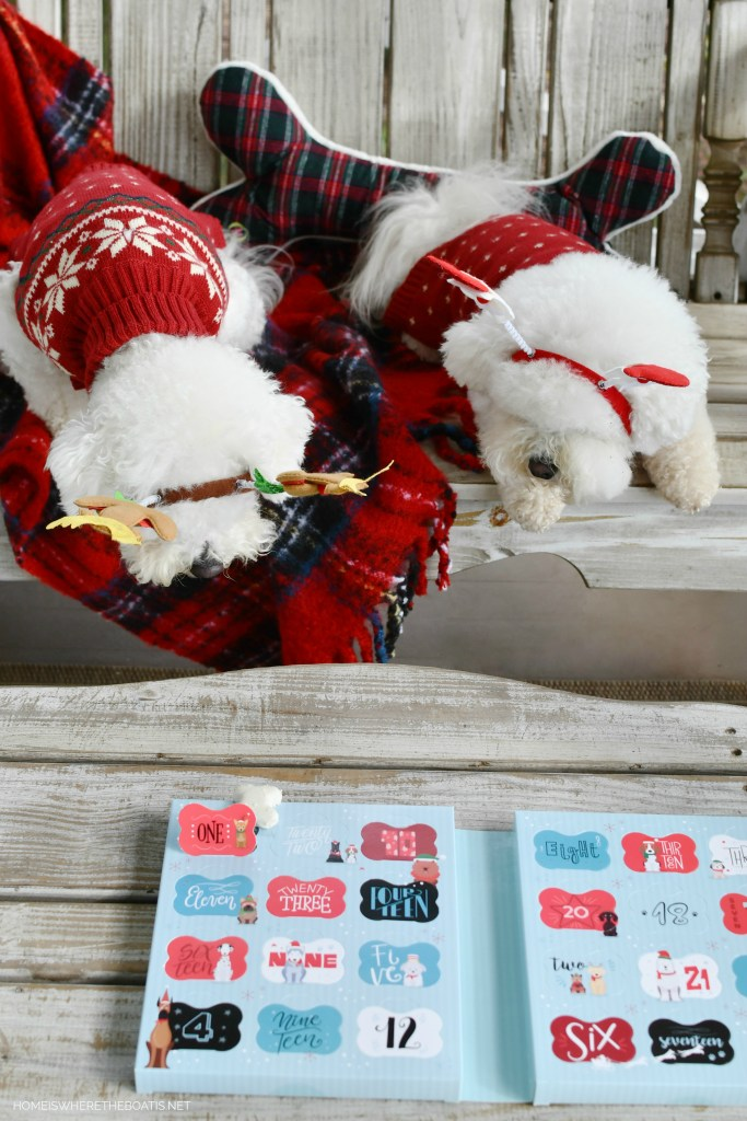 Dog Treat Advent Calendar | ©homeiswheretheboatis.net #dogs #bichonfrise #christmas