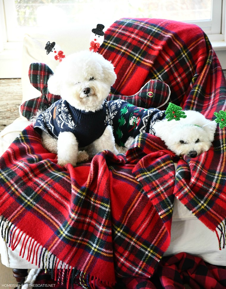 Lola and Sophie in Christmas sweaters and headbands | ©homeiswheretheboatis.net #christmas #plaid #tartan #dogs #bichonfrise