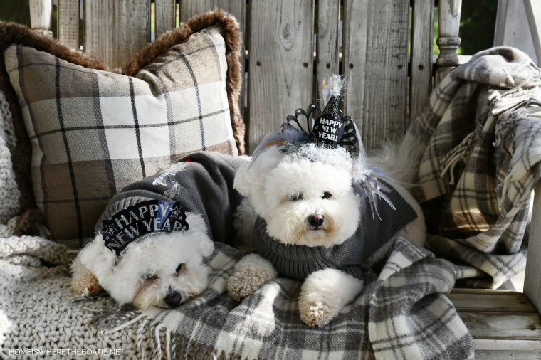 Happy New Year from Lola and Sophie | ©homeiswheretheboatis.net #dogs #bichonfrise #newyear