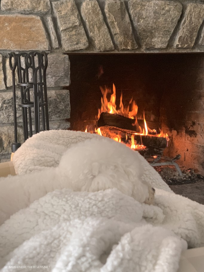 Sophie by fire in mountains   ©homeiswheretheboatis.net #dogs #snow #bichonfrise #ncmountains