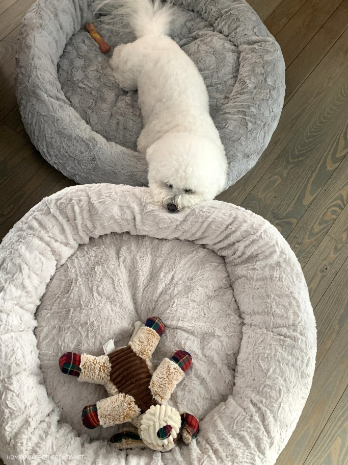 Lola in dog bed | ©homeiswheretheboatis.net #dogs #snow #bichonfrise #ncmountains