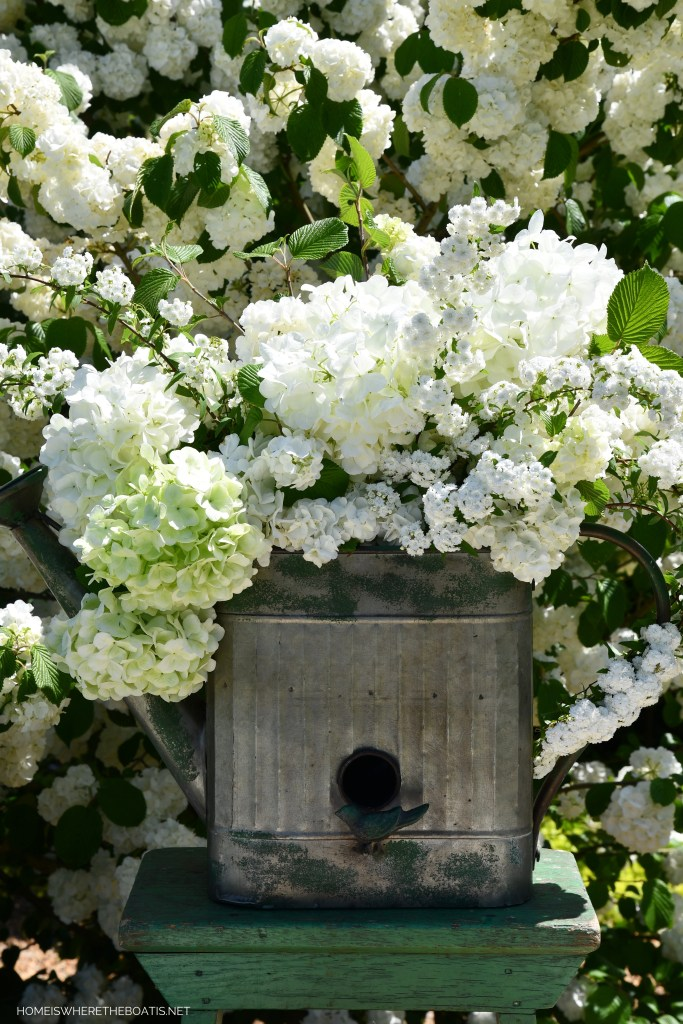 Watering Can Planter flower arrangement with snowball viburnum and spirea | ©homeiswheretheboatis.net #spring #flowers #garden