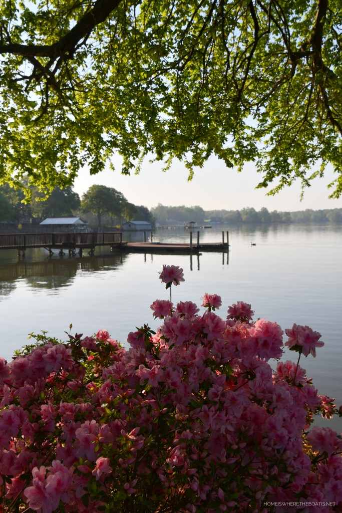 Weekend Waterview: Azaleas | ©homeiswheretheboatis.net #LKN #lakenorman