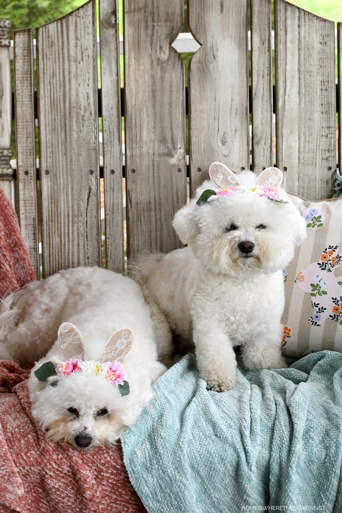 Hoppy Easter from Lola & Sophie | ©homeiswheretheboatis.net #dogs #bichonfrise #easter #bunnyears