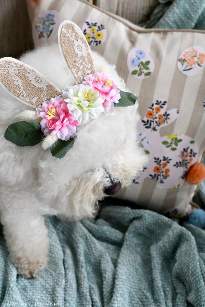 Lola Bunny Ears | ©homeiswheretheboatis.net #dogs #bichonfrise #easter #bunnyears