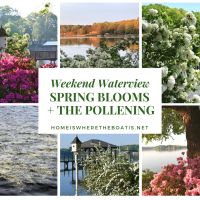 Weekend Waterview: Spring Blooms + The Pollening