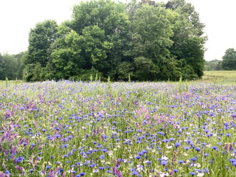 Field with wildflowers | ©homeiswheretheboatis.net #bees #garden #flowers