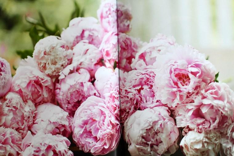 Peonies: Beautiful Varieties for Home & Garden by Jane Eastoe (Author), Georgianna Lane (Photographer)
