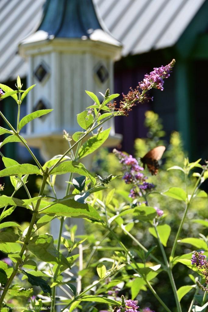 Butterfly on butterfly bush bloom | ©homeiswheretheboatis.net #summer #garden #flowers #daylilies #hydrangeas #bees #butterflies