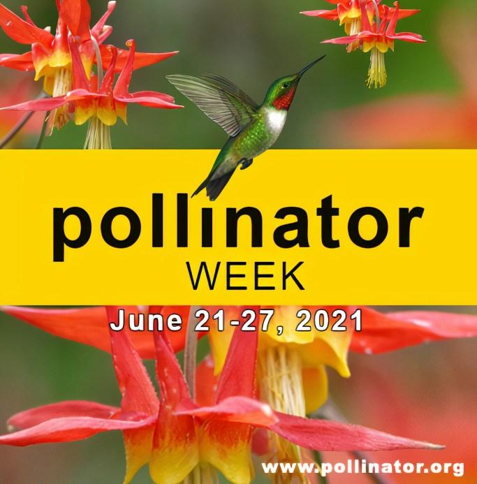 National Pollinator Week | ©homeiswheretheboatis.net #flowers #DIY #garden #bees #nationalpollinatorweek