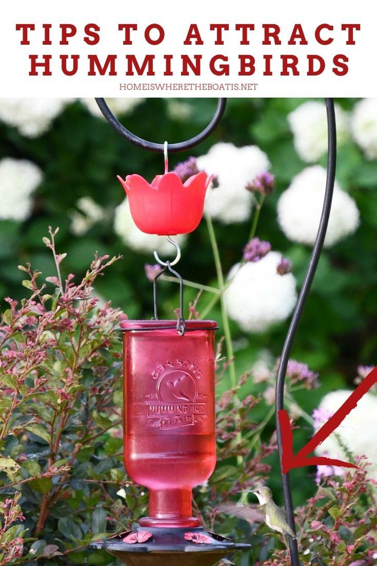 Tips to Attract Hummingbirds | ©homeiswheretheboatis.net #flowers #garden #hummingbirds #nationalpollinatorweek