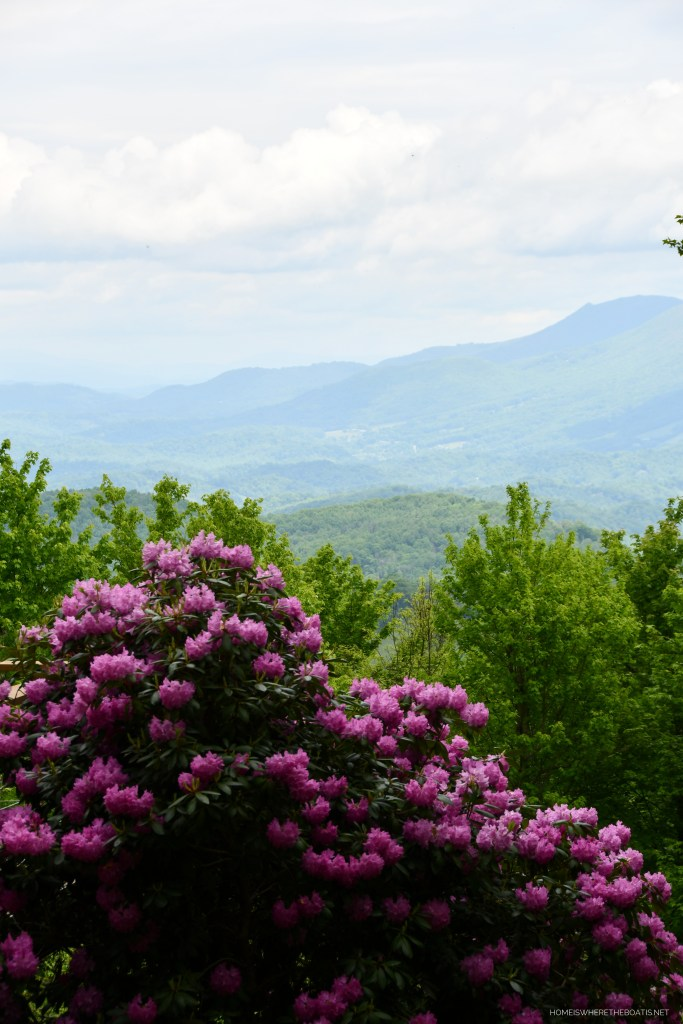 Rhododendron | ©homeiswheretheboatis.net #mountains