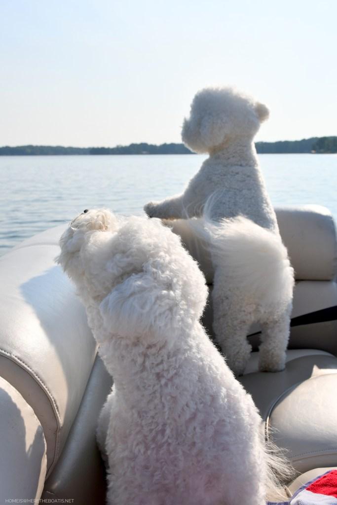 Weekend Waterview: The Dog Days of Summer   ©homeiswheretheboatis.net #dogs #boat #lake #pontoon #LKN