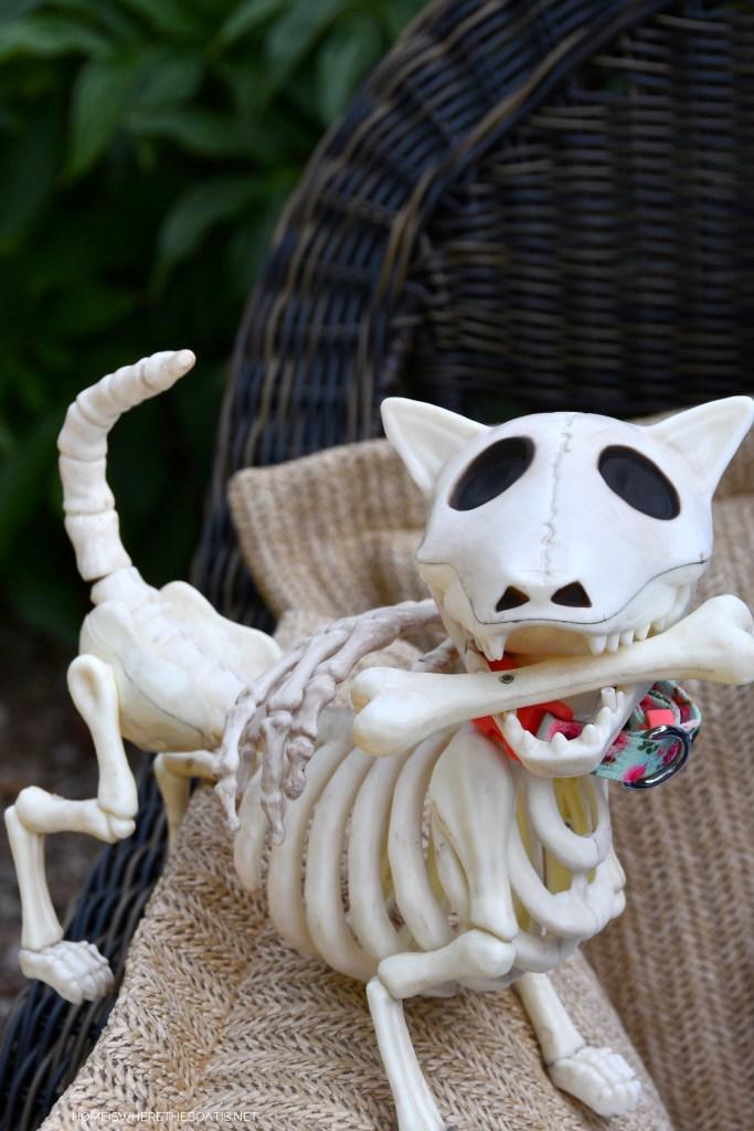 "Skeleton Dog ""Bona Lisa""   ©homeiswheretheboatis.net #skeleton #halloween #tablescape"