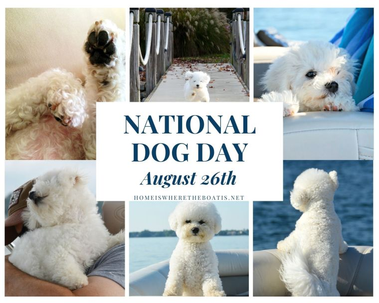 'Paws' for a celebration with your canine companions on National Dog Day. You'll find homemade dogs treats and more dog gone fun ways to celebrate.
