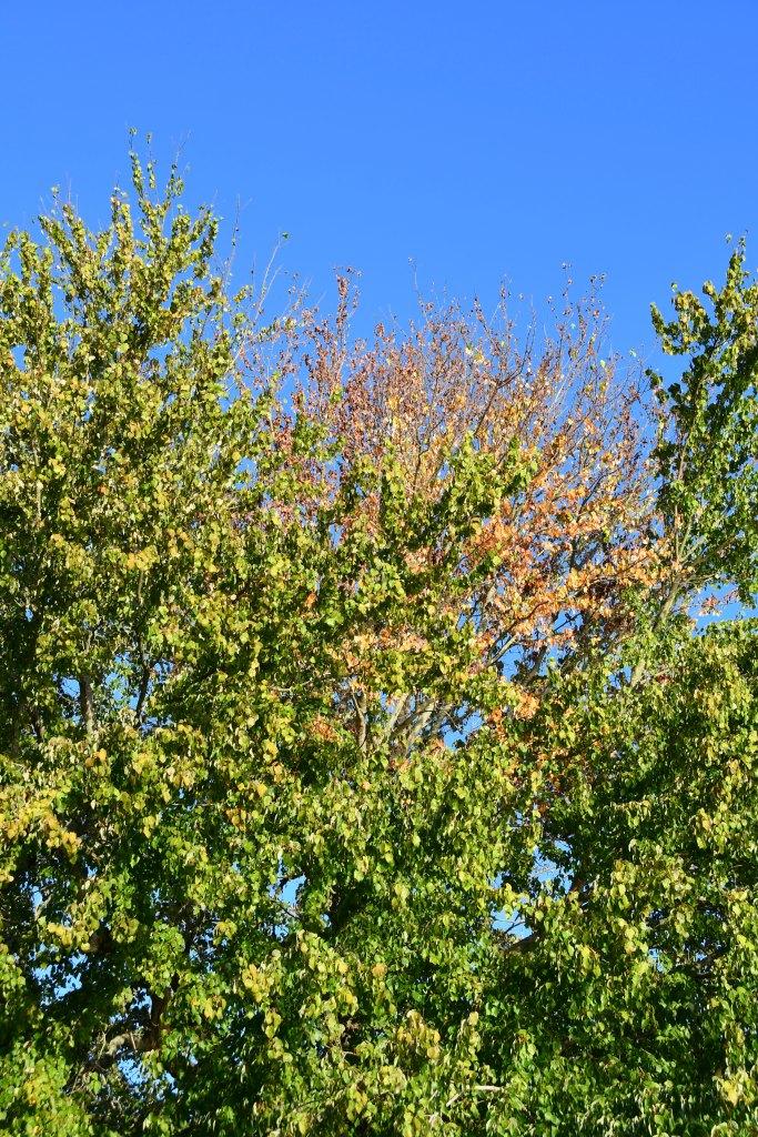 Lightning strike tree | ©homeiswheretheboatis.net