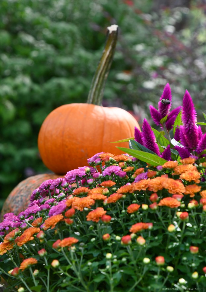 Two-tone pot of mums and celosia with bee | ©homeiswheretheboatis.net #fall #arrangement #mums #pumpkins