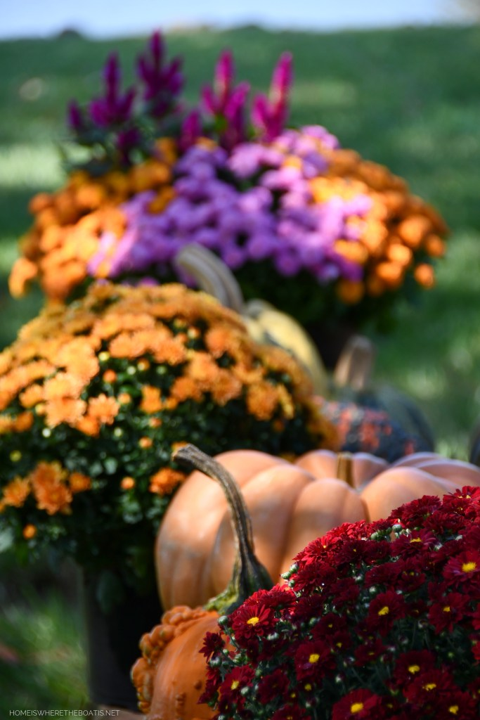 Pumpkins and mums on stone wall   ©homeiswheretheboatis.net #fall #pumpkin #flowerarrangement #DIY #alfresco #tablescape