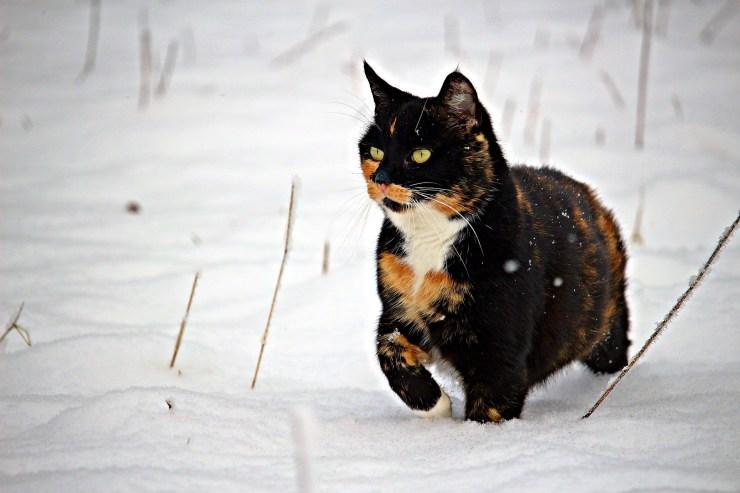 cat-1811792_1920