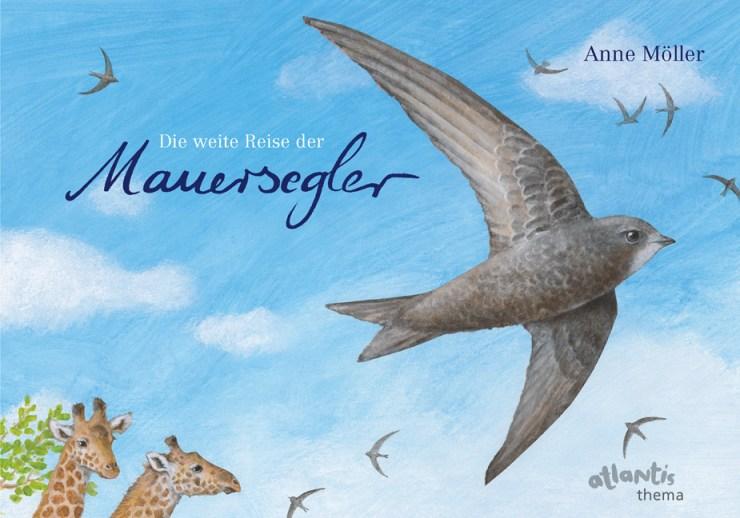 mauersegler01
