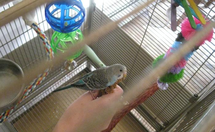 picking a parakeet