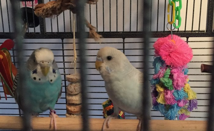 Deciding to get Toby a parakeet of her very own