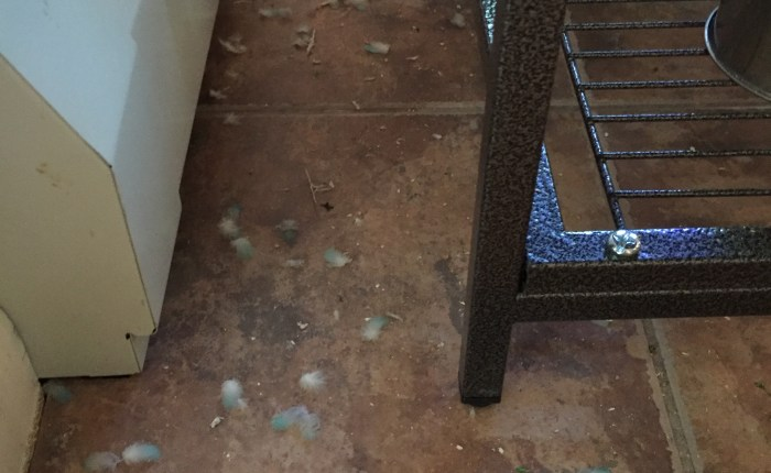 A tale of three vacuums – one of the most important items in the war against parakeet mess