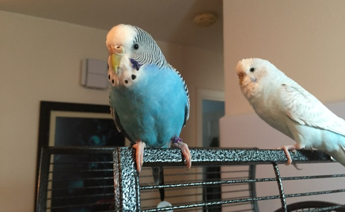 Please don't use nonstick cookware with parakeets in the home