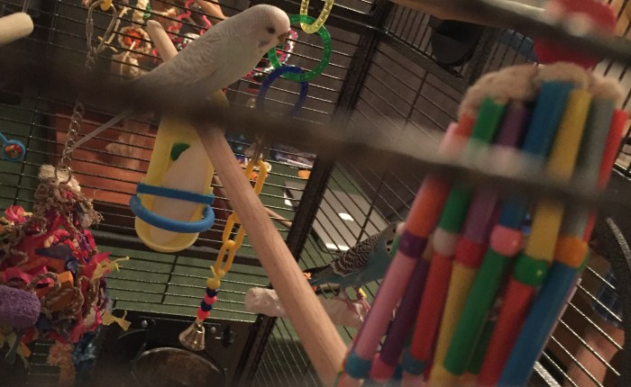Update to the review of the Super Bird Creations Wind Chime Toy for Birds
