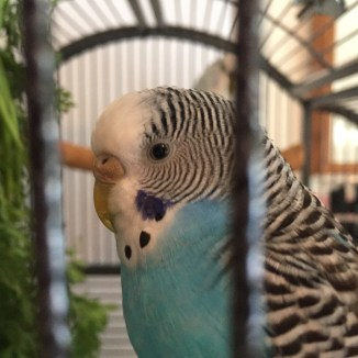 parakeet sight