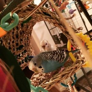 parakeet girl gang