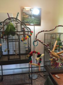 parakeet cages traditional flight cage