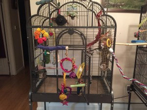 jam-packed with things for a cage bar biting budgie to chew