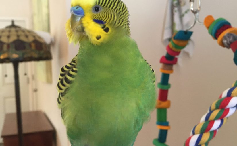 budgies use a lot of electricity