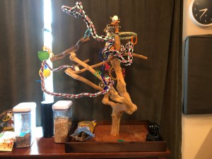 Java tree stand for parakeets