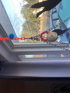 Hanging perch for parakeets near a window