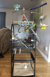 A standing play gym for parakeets