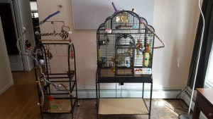 A budgie cage and play gym