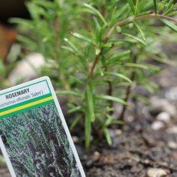 Gardening 101 ~ Herbs