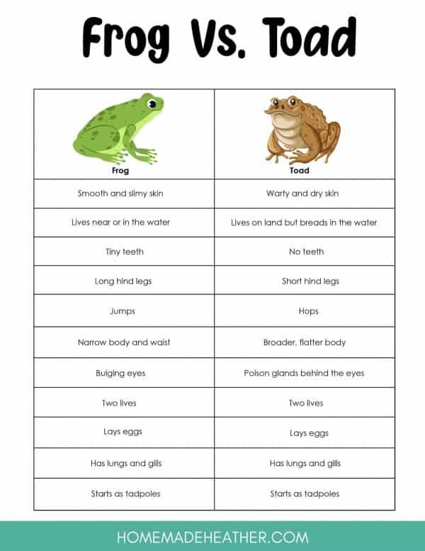 Frog vs Toad Printable